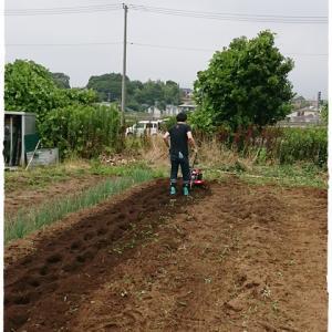 6月27日 畑作業と日常のわんこ
