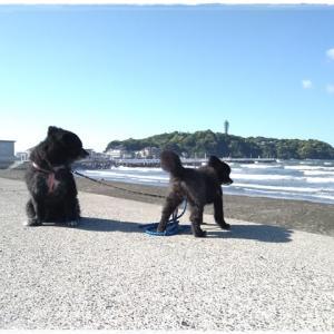 5月2日 江ノ島を後にして・・・