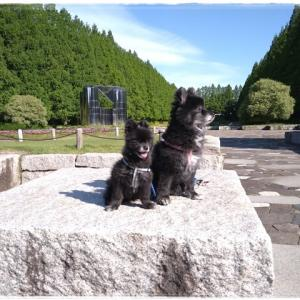 5月3日 相模原公園で大賀ゴジラ