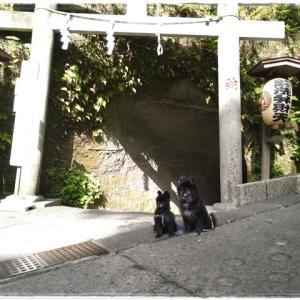 5月4日 鎌倉 駅まで散策