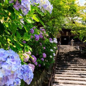 紫陽花咲く長谷寺