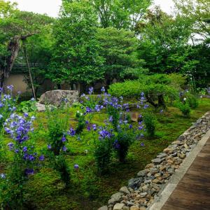 天得院・桔梗の庭