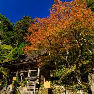 Opening!紅葉が彩る京都2019 峰定寺の彩り