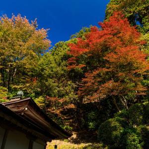 紅葉が彩る京都2019 染まり始めた常照皇寺