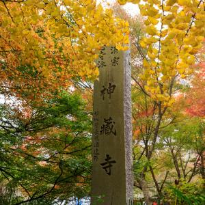 紅葉が彩る京都2019 霧を染める紅葉(神藏寺)