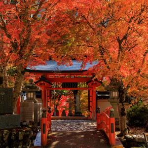 紅葉が彩る奈良2019 彩りの秋(天川村・龍泉寺)