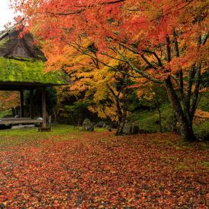 紅葉が彩る京都2019 古社の紅葉
