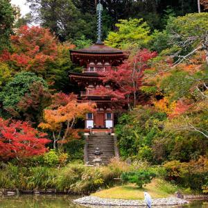 紅葉が彩る京都2019 浄瑠璃寺・秋の粧い