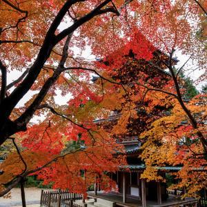 紅葉が彩る京都2019 海住山寺の秋色