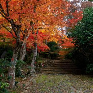 紅葉が彩る京都2019 和束の山寺にて