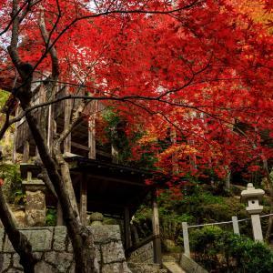 紅葉が彩る滋賀2019 染まる不動寺