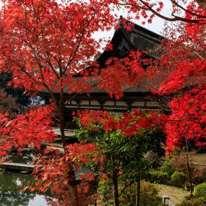 紅葉が彩る滋賀2019 善水寺の彩り