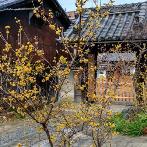 勝念寺の黄色い彩り