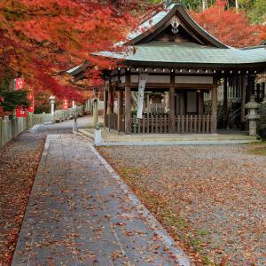 紅葉が彩る京都2019 桑田神社にて
