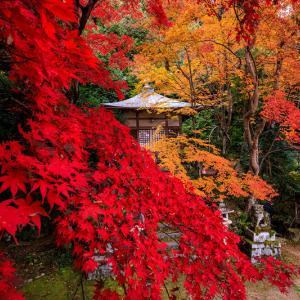 紅葉が彩る京都2019 艶秋(護法堂弁財天)