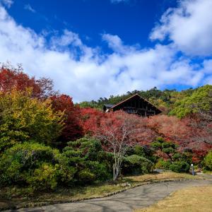 紅葉が彩る京都2019 美術館の秋(大山崎山荘美術館)