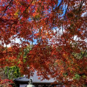 紅葉が彩る京都2019 山崎聖天にて