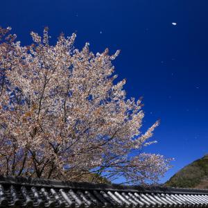 2020桜咲く奈良 青空の本善寺(後編)