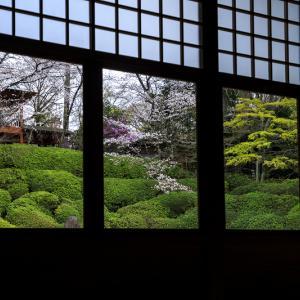 2020桜咲く京都 光明院・春景