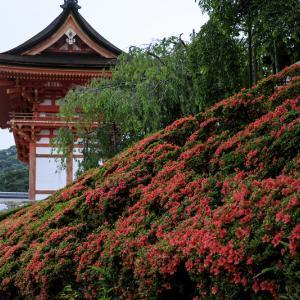サツキ咲く清水寺
