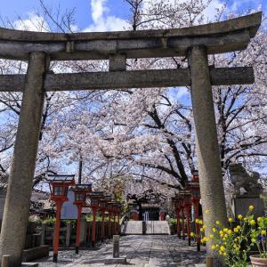 2020桜咲く京都 桜・さくら・サクラソウ(六孫王神社)