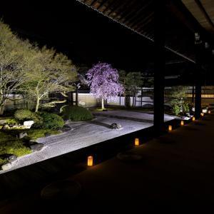 2020桜咲く京都 妙顕寺ライトアップ