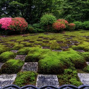 東福寺方丈庭園「八相の庭」のサツキたち