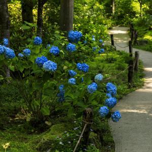 初夏の花咲く三千院