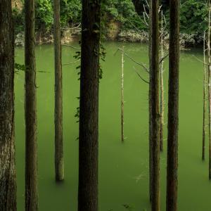 三俣川の不思議な光景(京都市右京区)