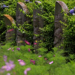 般若寺の夏咲きコスモスと紫陽花