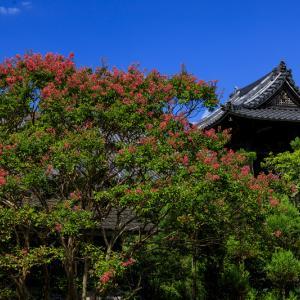 慶恩寺のサルスベリ
