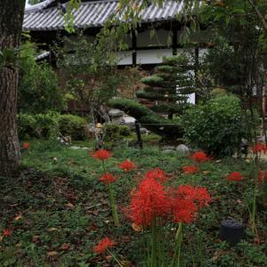 恵心院の彼岸花と秋の花々