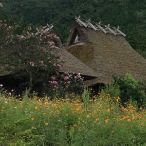 美山の蕎麦と秋の花たち(前編)