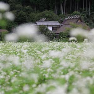 美山の蕎麦と秋の花たち(後編)