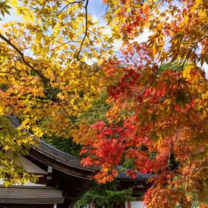 2020紅葉きらめく奈良 染まり始めた龍泉寺