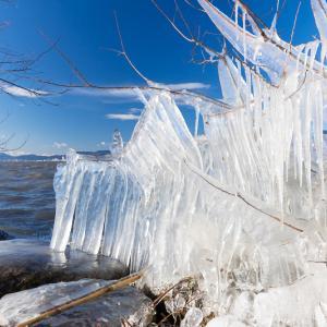 飛沫氷の造形美