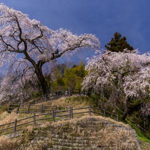 2021桜咲く奈良 室生小原の極楽桜