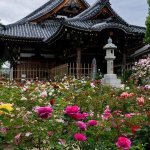 薔薇の寺(おふさ観音)
