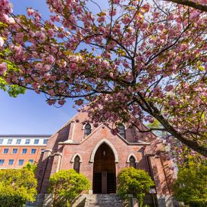 2021桜咲く京都 同志社大学の春景色