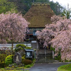 2021桜咲く奈良 紅しだれ咲く山里の寺