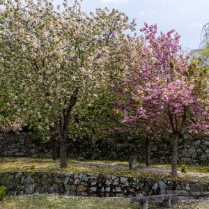 Finale! 2021桜咲く京都 圓光寺の八重桜たちと新緑