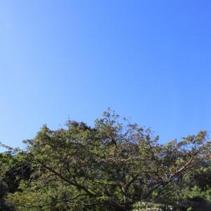 台風後のお散歩(お山へ)(1)