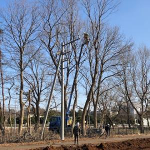 国施設の木の伐採!d(^-^)
