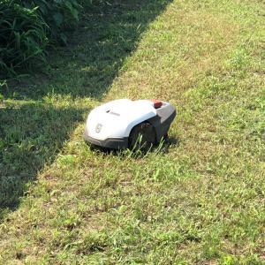 可愛い働き者♪ロボット芝刈り機!!ヾ(^^へ)