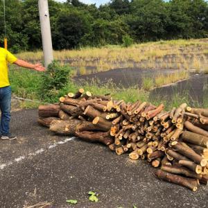 二つのトラブル!プチ林業、完了ヽ(^^;