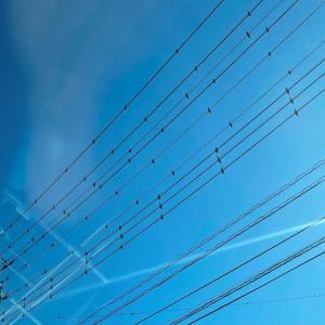 電線からの鳥フン対策…影とどっちを取るかヾ(–;
