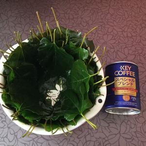 冷凍桑と今年最後のご挨拶