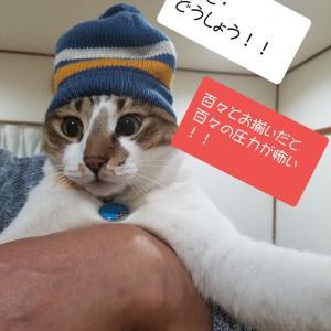 のん太はハレて自由ねこ!?~お揃いの帽子~