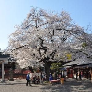 桜の花に癒されて2019②世良田東照宮