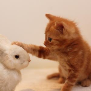 愛のハリセン 猫パンチ!